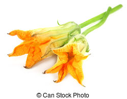 Squash blossoms Images and Stock Photos. 900 Squash blossoms.