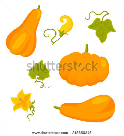 Pumpkin Flowers Stock Photos, Royalty.