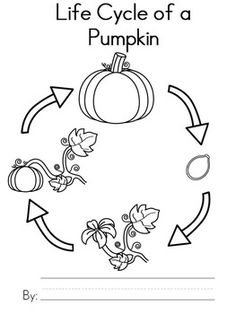 Life Cycle of a Pumpkin Mini Booklet.