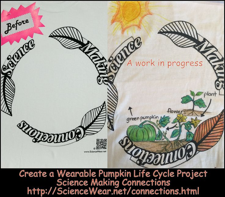 Pumpkin Life Cycle project for the classroom. Only need clipart.