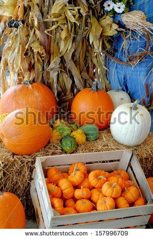 Pumpkins Autumn Corn Stalk Stock Photos, Royalty.