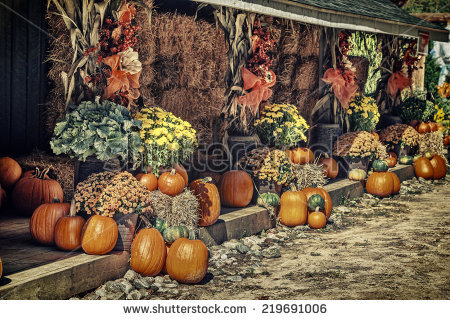 Pumpkins Autumn Corn Stalk Stock Photos, Royalty.