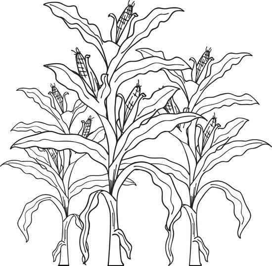 25+ best ideas about Corn Stalks on Pinterest.