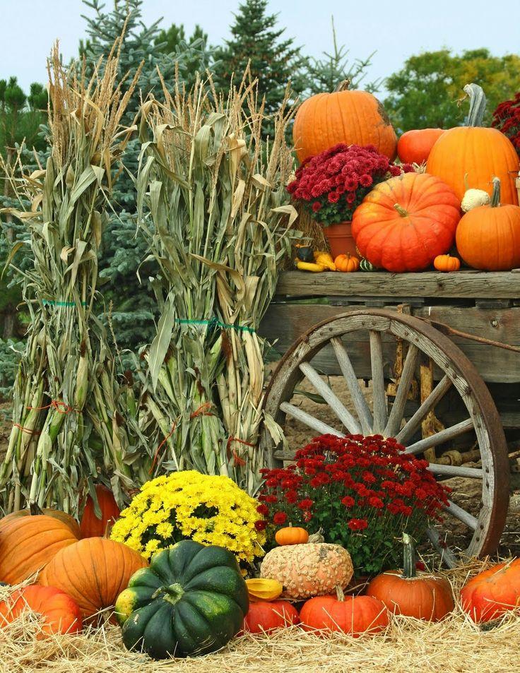 25+ best ideas about Corn Stalk Decor on Pinterest.