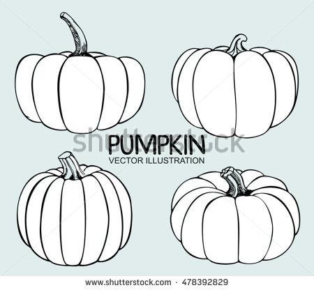 Vector Single Sketch Pumpkin Doodle Pumpkins Stock Vector.