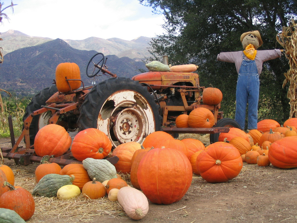 Boccali Ranch Pumpkin Patch.