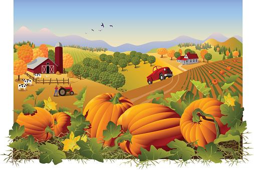 Pumpkin field clipart.