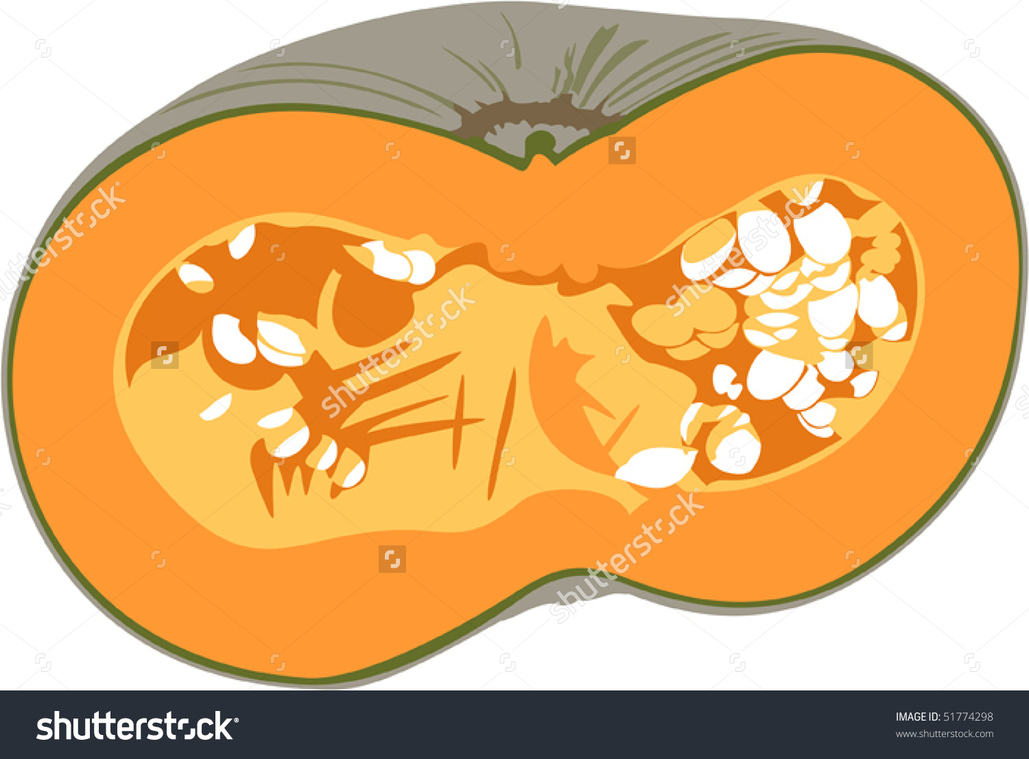 Pumpkin Half, Isolated On White Stock Vector Illustration 51774298.