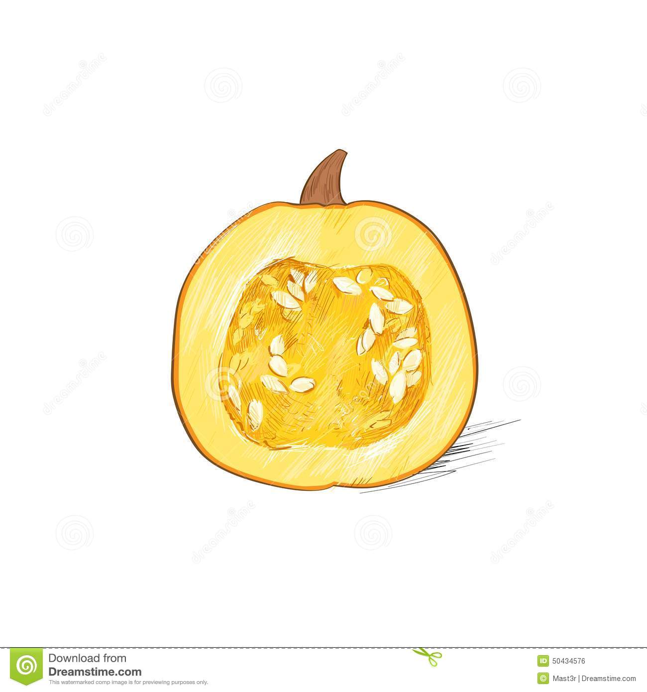 Pumpkin Half Cut Sketch Draw Isolated Over White Stock Vector.