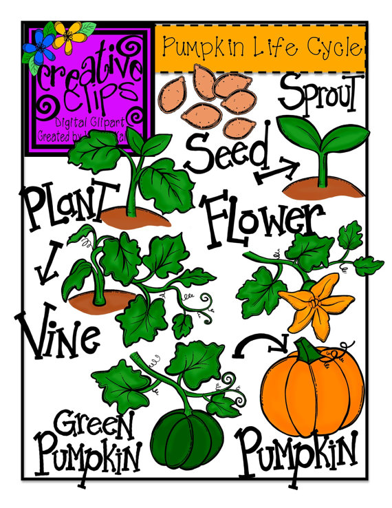 Pumpkin Life Cycle Clipart.