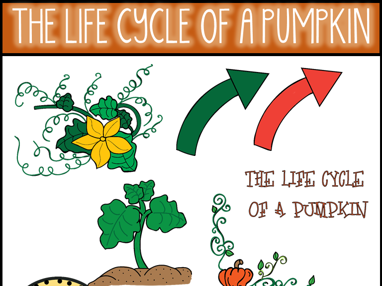 The Life Cycle of a Pumpkin Clip Art.
