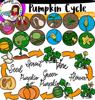 Pumpkin Life Cycle Clip Art.
