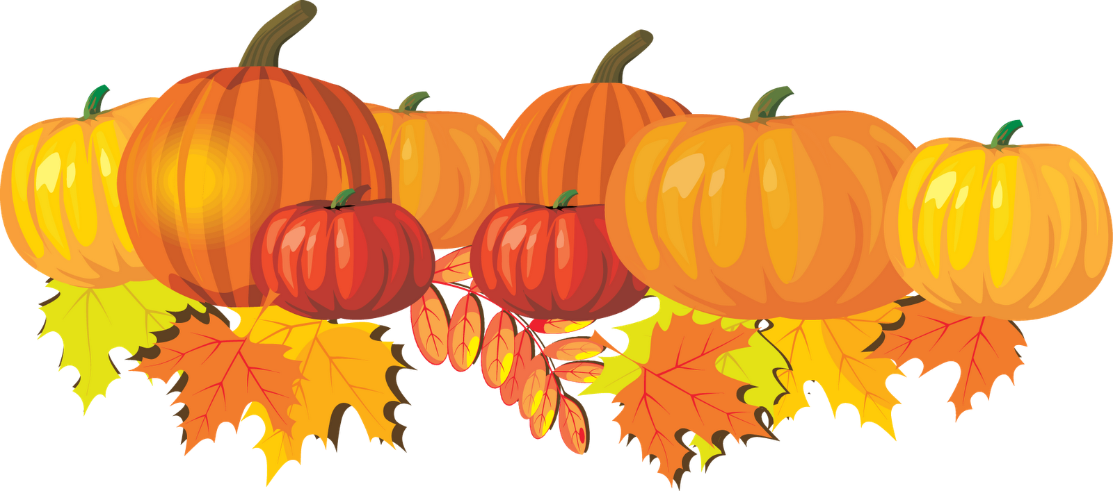 Pumpkins clipart image several pumpkins in a pumpkin patch.