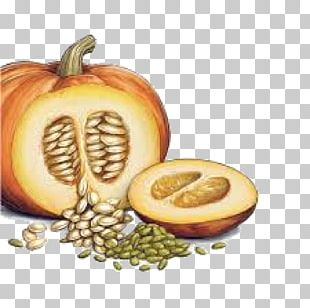 Pumpkin Seed PNG Images, Pumpkin Seed Clipart Free Download.