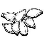 Pumpkin seed clipart black and white.
