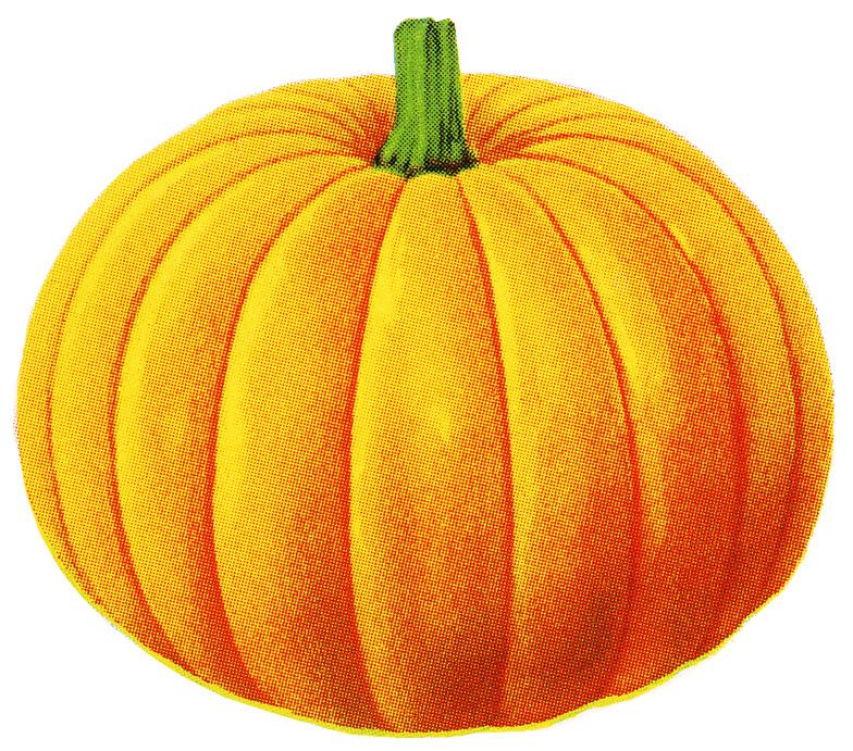 Varieties of pumpkins clipart - Clipground