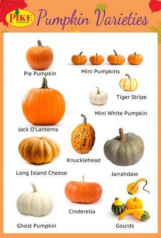 17 best ideas about Pumpkin Varieties on Pinterest.