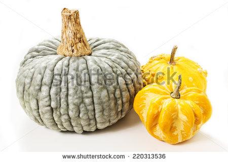 "warts Pumpkin"" Stock Photos, Royalty."