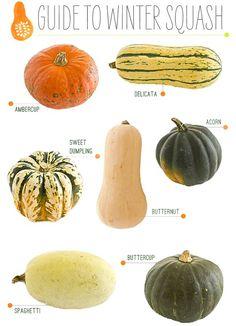 Alternative Gardning: Pumpkin & Squash Varieties Chart.