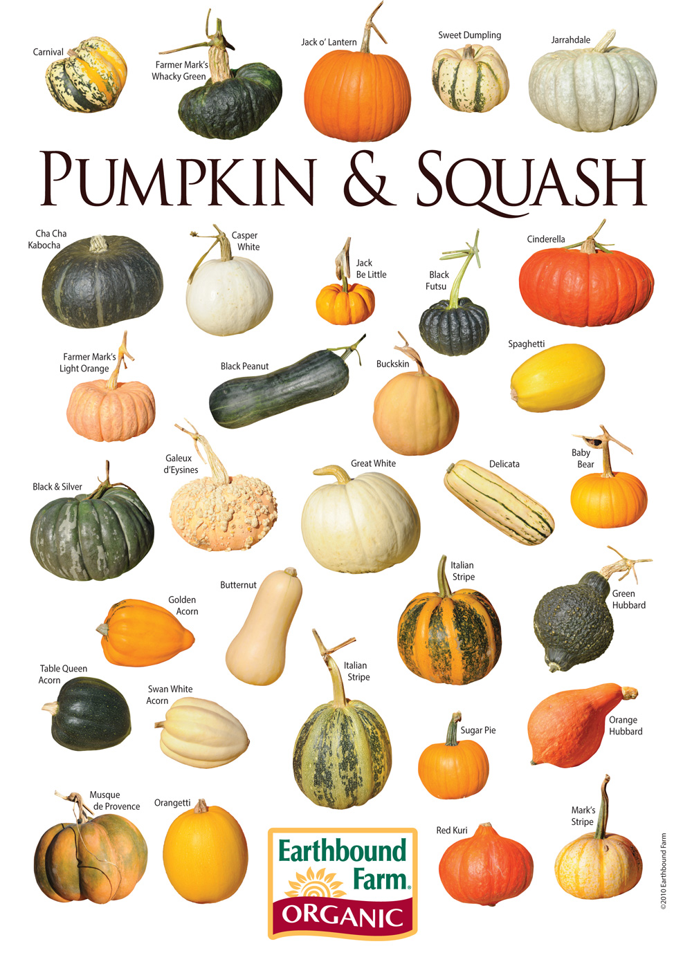 1000+ ideas about Types Of Pumpkins on Pinterest.