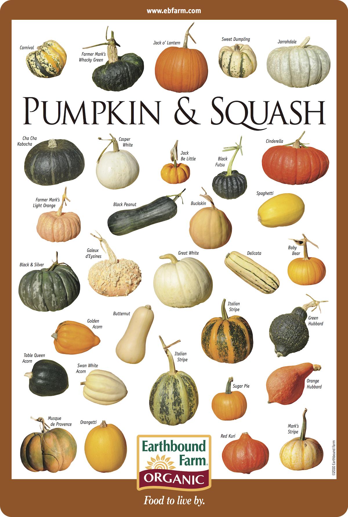 Pumpkin Squash Varieties.
