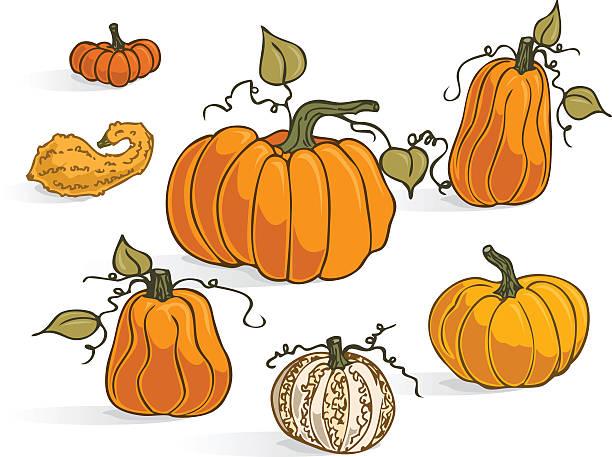 Clip Art Of Squash Varieties Clip Art, Vector Images.
