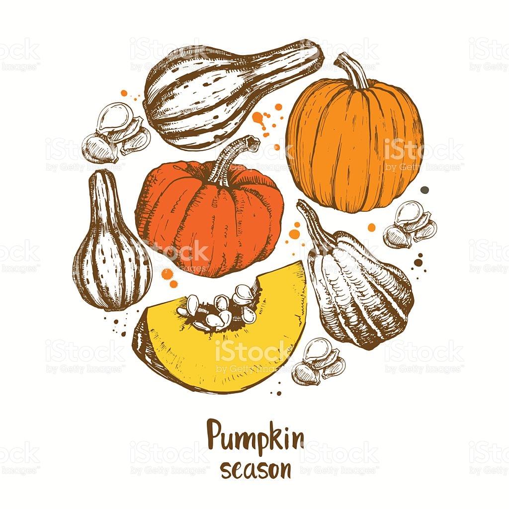 Pumpkin Vector Different Varieties Of Pumpkins stock vector art.