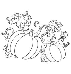 Pumpkin harvest drawing in retro style vector.