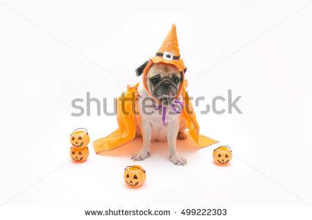 Pet Pumpkin Stock Photos, Royalty.