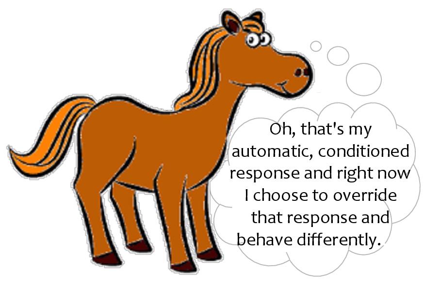 Domestically wild horses.