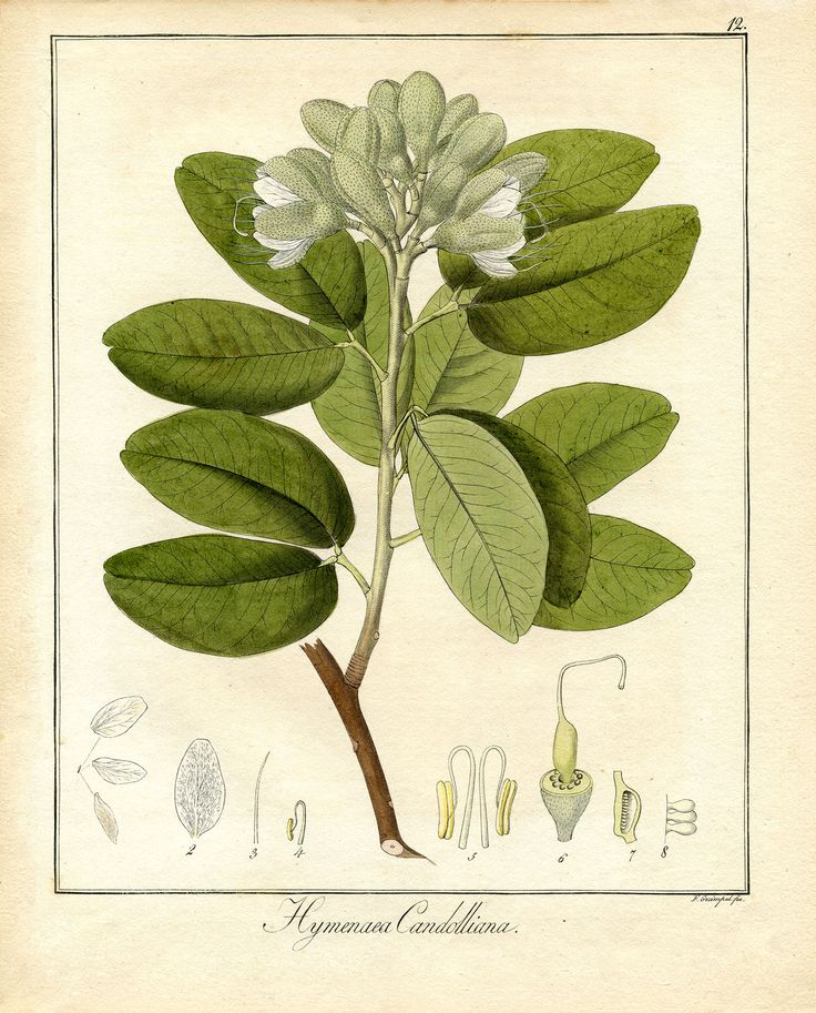 1000+ images about botanical print on Pinterest.