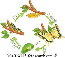 Pupa Clipart and Illustration. 202 pupa clip art vector EPS images.