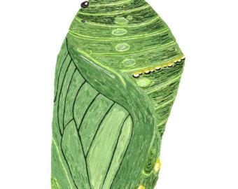Monarch chrysalis.