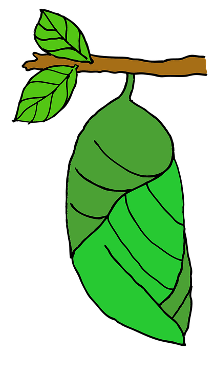 Free illustration: Pupa, Butterfly, Stage, Nature.