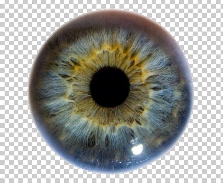 Iris Human Eye Pupil Eye Color PNG, Clipart, Achi, Agar.