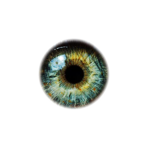 Eye Pupil PNG Picture.
