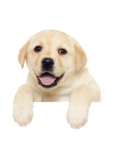 Download Free png PNG HD Of Puppies Transparent HD Of.