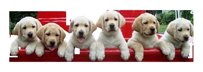 Puppies climbing transparent image.