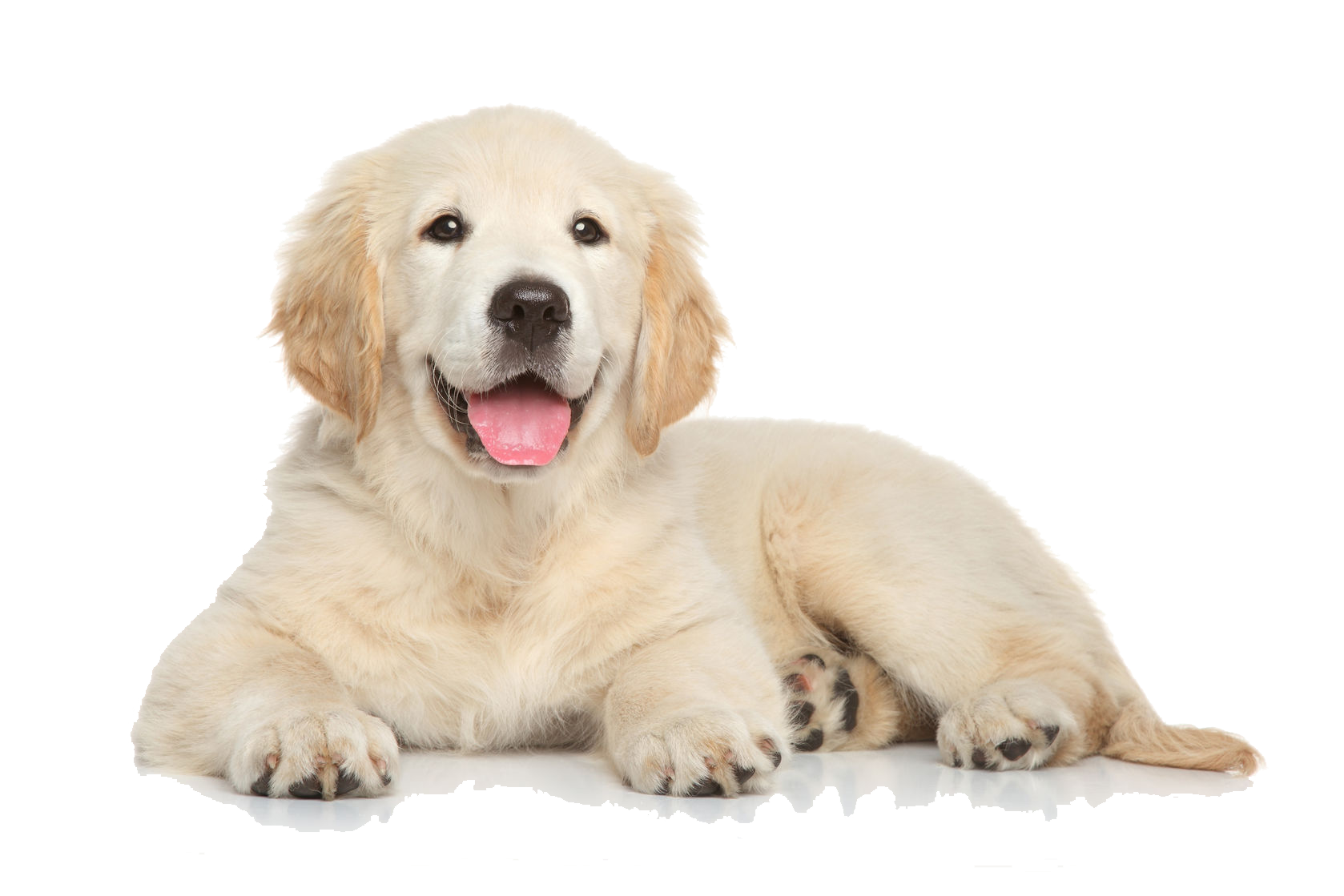 Puppy PNG Images Transparent Free Download.