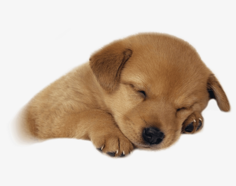 Free Png Cute Puppies Png Images Transparent.