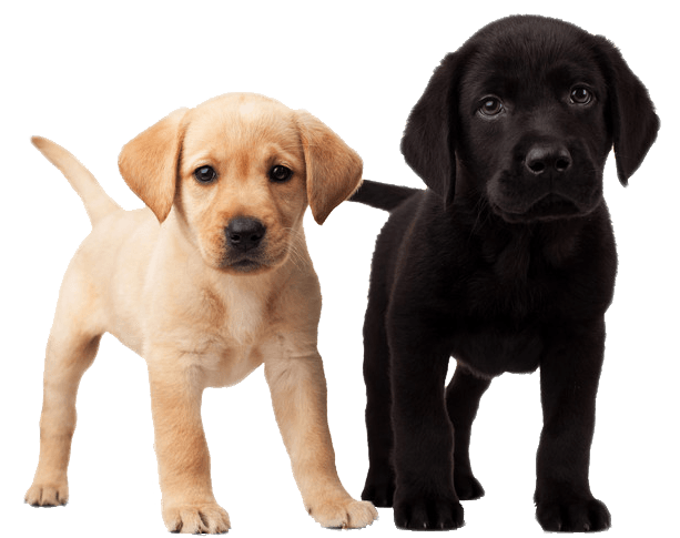 Cute Puppies transparent PNG.