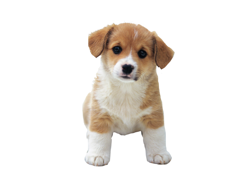 Download Free png So Cute Puppies Image Puppy.