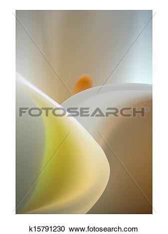 Clipart of Elegant pure white kala flower bokeh close.