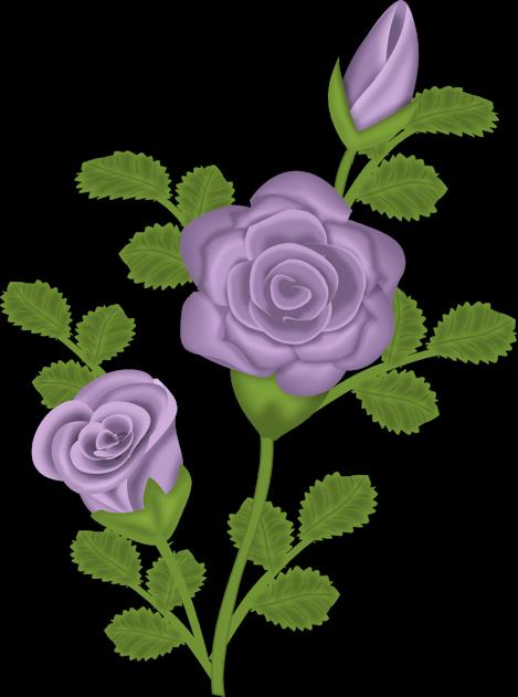 Purple_Rose_Transparent_Clipart.png?m=1367618400.