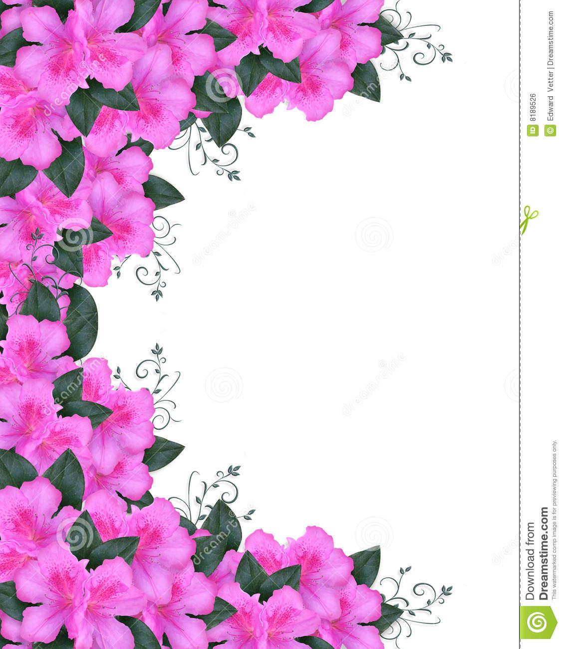 Invitation Border Pink Azaleas Royalty Free Stock Image.