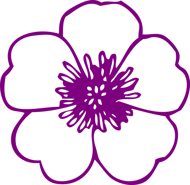 Free vector graphic: Flower, Purple, Blossom, Bloom.