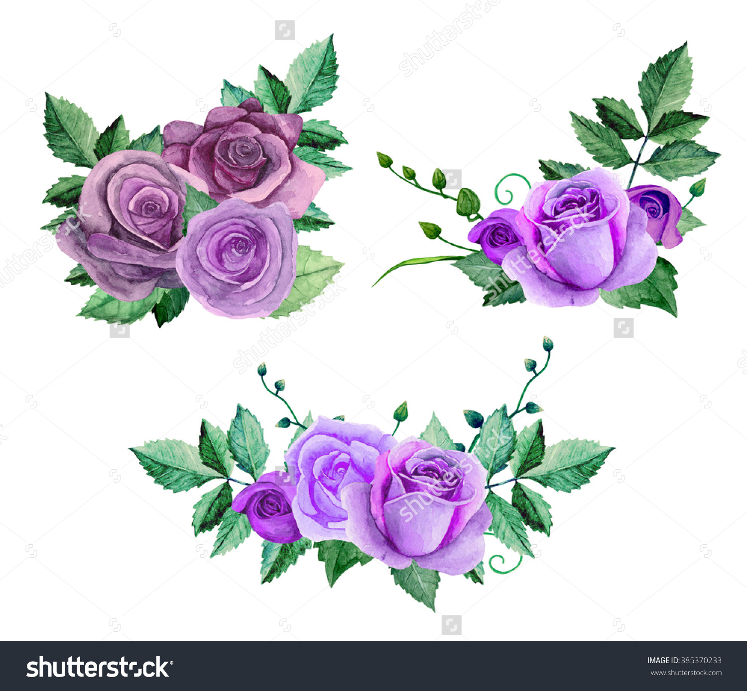 Watercolor Purple Roses Flowers Clip Art Stock Illustration.