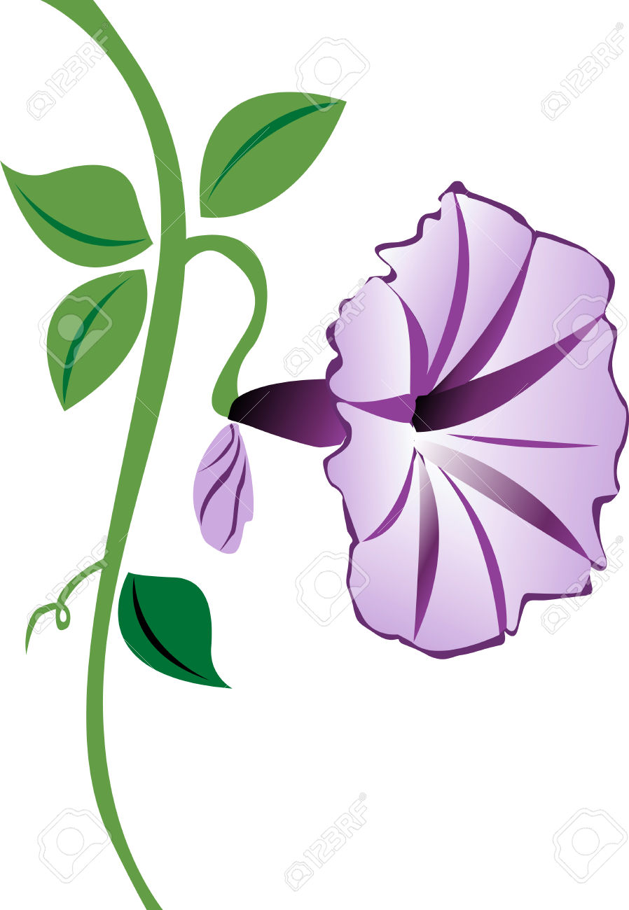A Purple Morning Glory Flower With Leaves And A Bud. Royalty Free.
