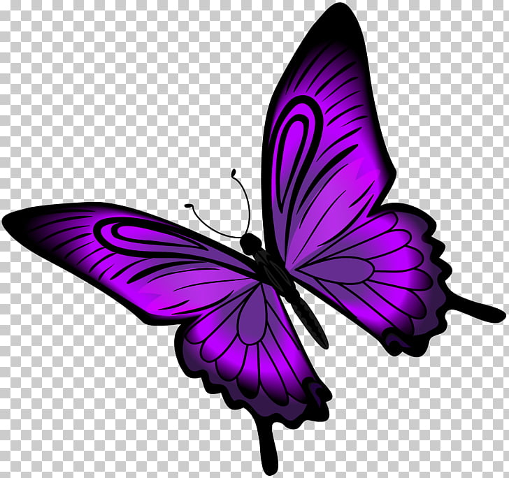 Purple Butterfly , Purple Butterfly , purple butterfly.
