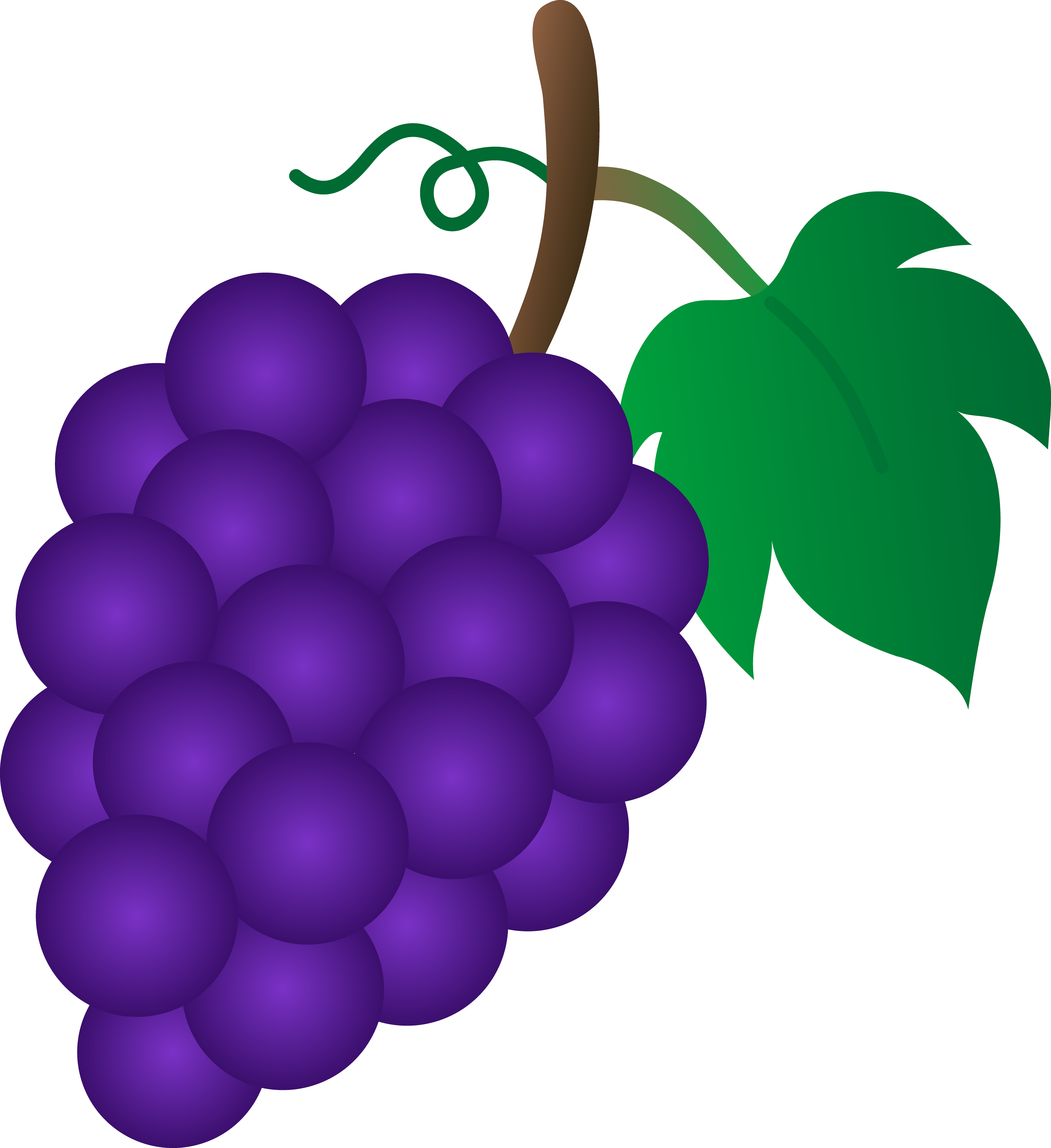 Bunch of Purple Grapes.